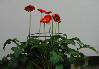 Flower supports